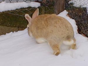 Arturo sulla neve