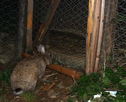 Gioia aspetta all'entrata del recinto per allattare i piccoli