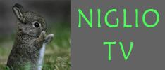 NIGLIO TV: carica su protty.it i video dei tuoi coniglietti