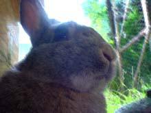 ¡Conejo: hermano tímido, mi maestro y filósofo!