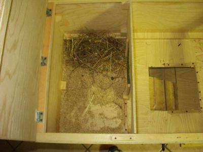 dettaglio del nido